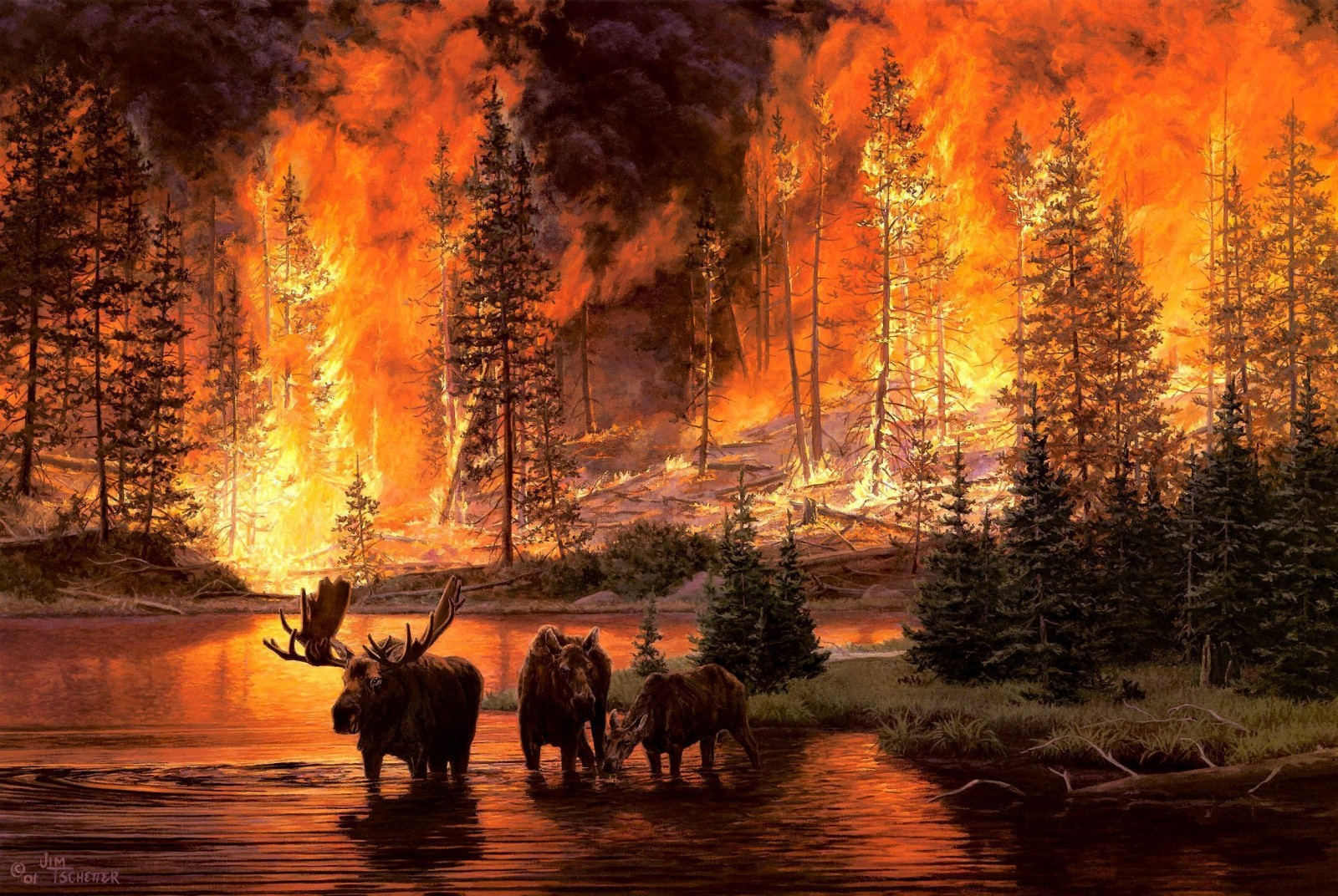 2294x1537_px_animals_art_artistic_fire_flames_forests_Jim-1667999